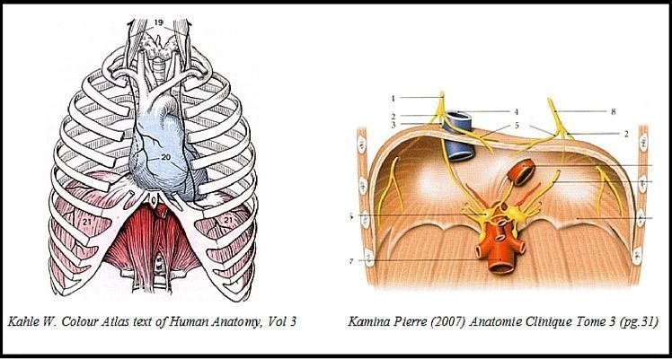 Respirar. Imagen del músculo diafragma