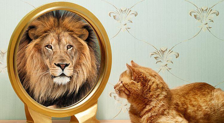 Autoengaño. El gato que se cree león