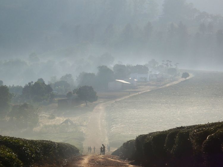 Mozambique. Plantaciones de té de Gurué