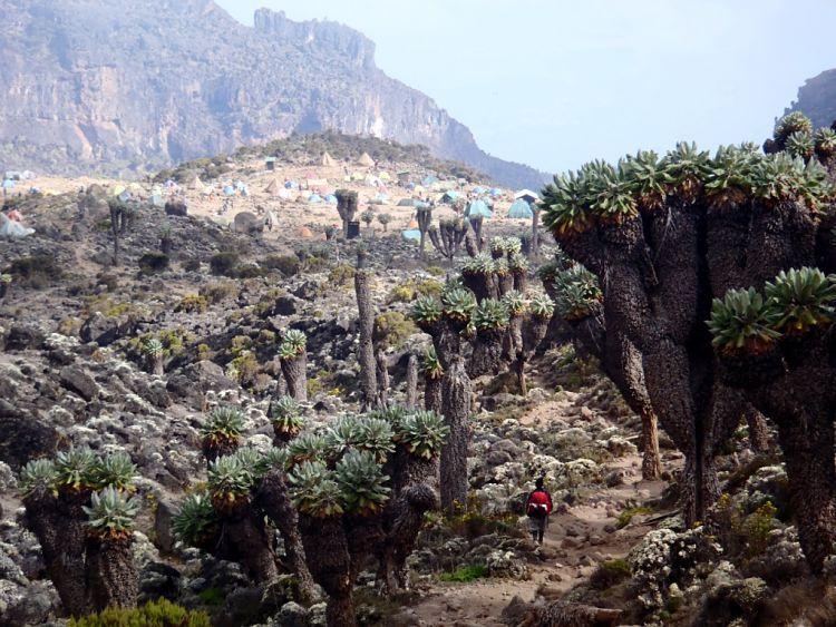 Kilimanjaro. Paisajes de far-west