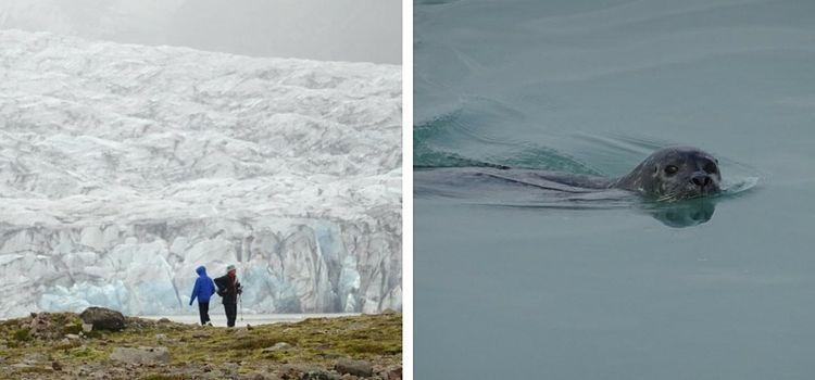 Islandia. Skaftafell y focas