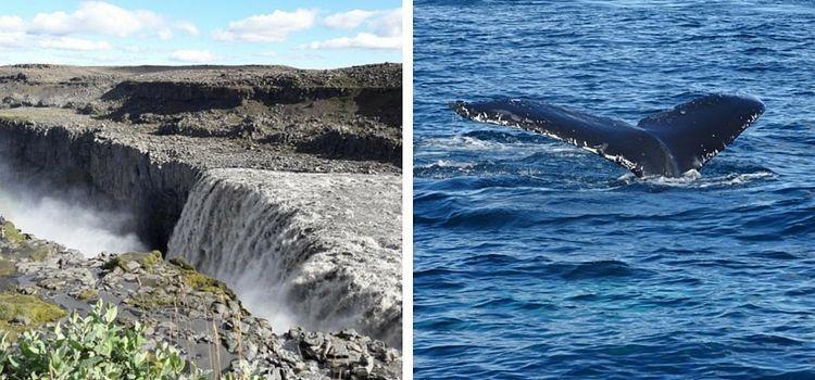 Islandia. Detifoss y Ballenas
