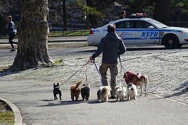 New York. Paseador de perros