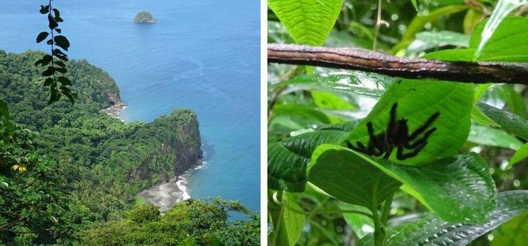 Isla de Martinica. Rando norte.
