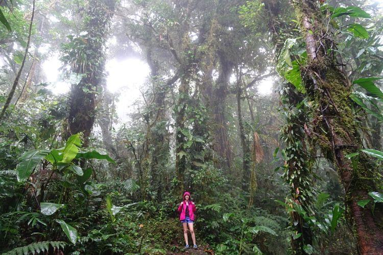 Panamá y Costa Rica. Monteverde