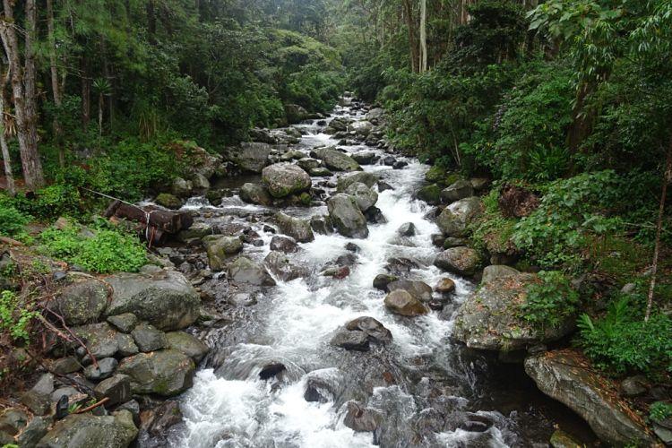 Panamá y Costa Rica. Río en Boquete