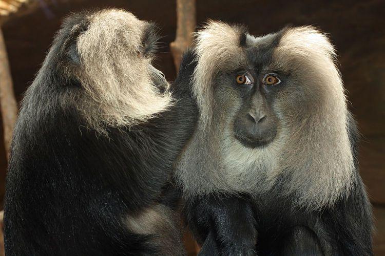 Ley de causa y efecto. Monos desparasitándose