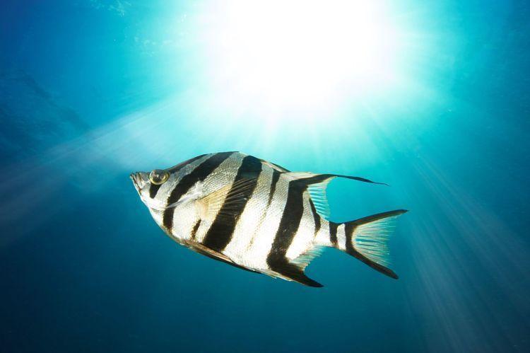 Tu talento es el elemento donde te sientes como pez en el agua