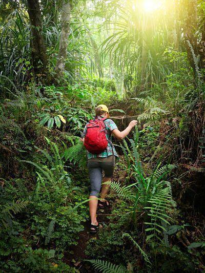 Sobrevivir en la selva. Sigue los caminos.