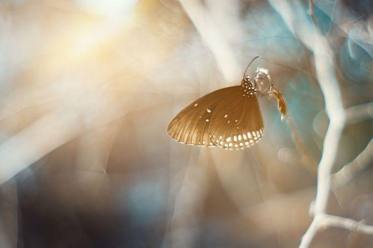 Determinismo e indeterminismo. Efecto mariposa