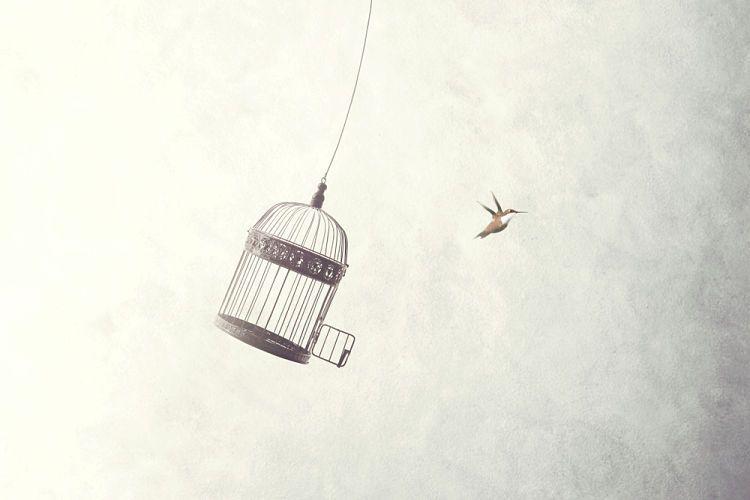 Determinismo e indeterminismo. Concepto de libertad