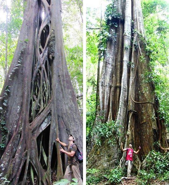 Guayana lugares