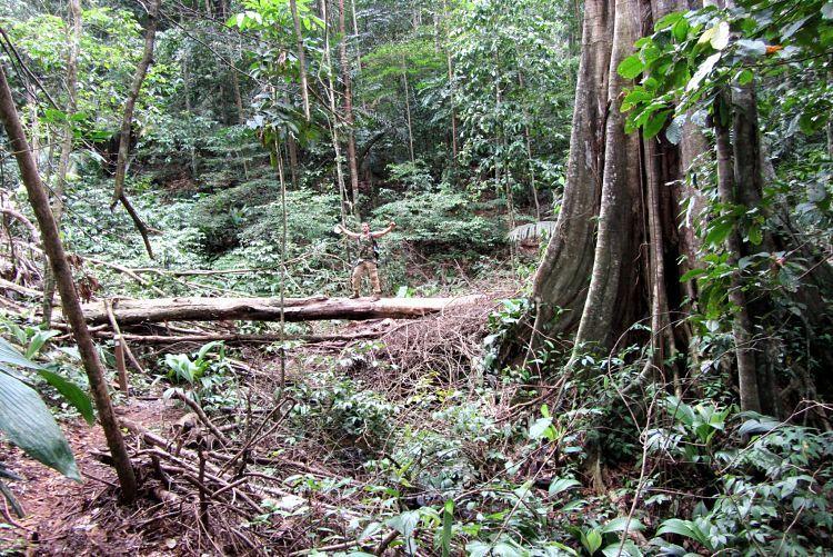 Guayana francesa lugares. Molokoi
