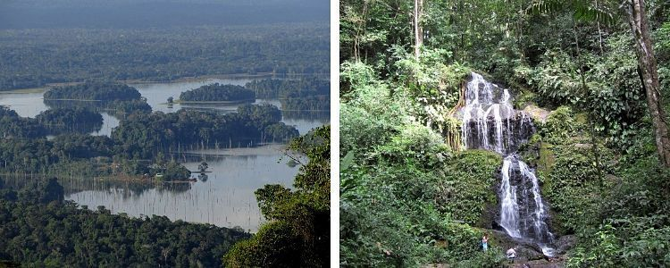 Surinam y Guyana. Brownsberg Park