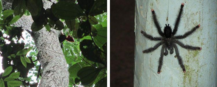 Surinam y Guyana. Fauna increíble.