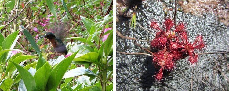 Roraima. Flora y fauna