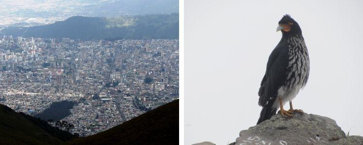 imágenes desde el Rucu Pichincha