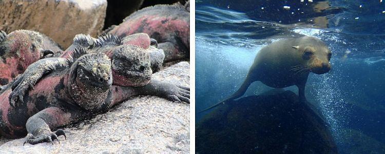 animales de las islas Galápagos. Ecuador